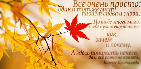 Про любовь и красивые цитаты цитаты о